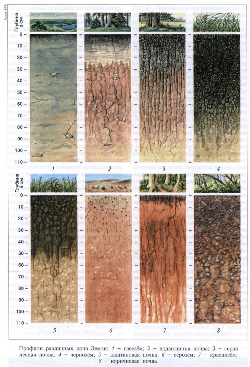 биогеография основные биомы суши план-схема.