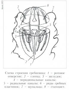 Гребневики